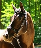 Zaldi CASTECUS  Portuguese Single/ Double Reins Bridle