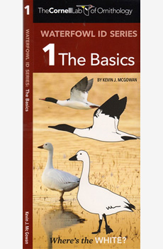 Waterfowl ID Series: The Basics