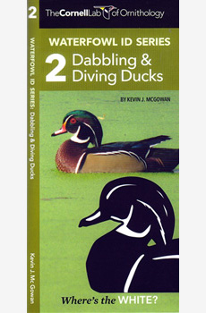 Waterfowl ID Series: Dabbling & Diving Ducks (2)