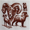 Animal Sketch Single - Bighorn Sheep