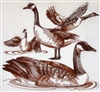 Animal Sketch Single - Canadian Goose