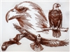 Animal Sketch Single - Eagle
