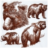 Animal Sketch Single - Bear