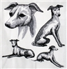 Dogs - Italian Greyhound