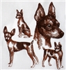 Dogs - Toy Fox Terrier