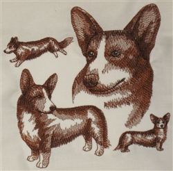 Dogs - Cardigan Welsh Corgi