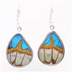 Teardrop Butterfly Wing Earrings