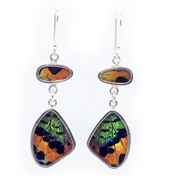 "real butterfly wing ""Flutter"" earring"