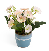 Dainty Daisies Flower Pot