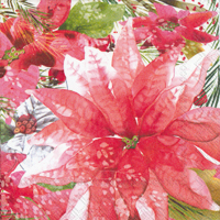 Amaryllis and Poinsettia Cocktail Napkin