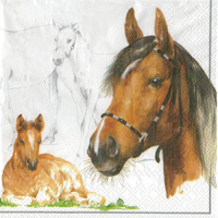 Horse Cocktail Napkin