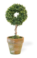Circle Topiary in Clay Pot