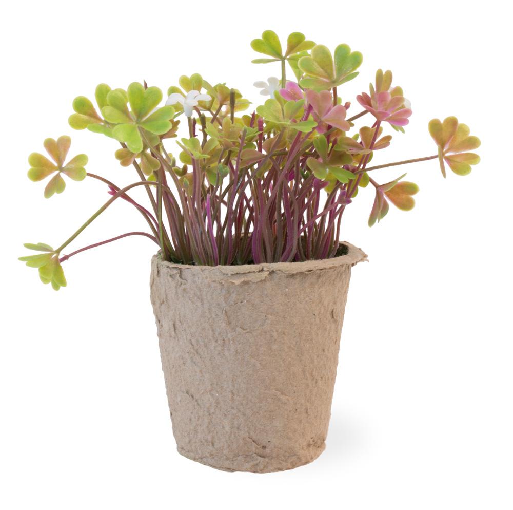 Clover White Flowers Fern In Paper Pot
