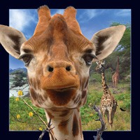 Worth Keeping Giraffe 4D Card