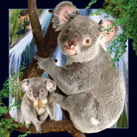 Worth Keeping Koala 4D Card