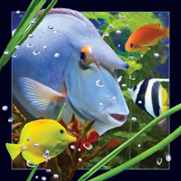 Worth Keeping Blue Fish 4D Card