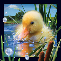 Worth Keeping Duckling 4D Card