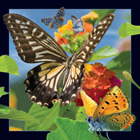 Worth Keeping Butterfly 4D Card