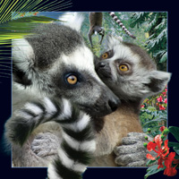 Worth Keeping Lemur 4D Card