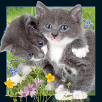Worth Keeping Kittens 4D Card
