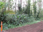Hawaii, Hawaii County, 1/4 Acre Nanawale Estates,Ginger Road. TERMS $175/Month