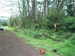 Hawaii, Hawaii County, 1/4 Acre Nanawale Estates, Electricity. TERMS $175/Month