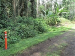 Hawaii, Hawaii County, 1/4 Acre Nanawale Estates, Hibiscus Road. TERMS $150/Month