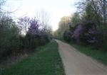 Missouri, Washington County, .20 Acre Rogue Creek, Lot 1. TERMS $125/Month