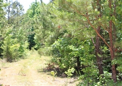 Tennessee, Decatur County, 6 Acre Hickory Hill Ranch, Creek. TERMS $240/Month