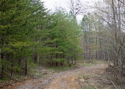 Tennessee, Sequatchie County, 5.8 Acre Hidden Hills, Lot 48. TERMS $185/Month