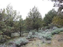 California, Lassen County,  20.62 Acres Moon Valley Ranch. TERMS $190/Month