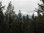 California, Lassen County,  21 Acres Moon Valley Ranch. TERMS $195/Month