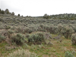 California, Lassen County,  20 Acres Moon Valley Ranch. TERMS $220/Month