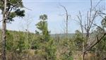 Oklahoma, Pittsburg County, 10.66 Acres Indian Ridge II. TERMS $250/Month
