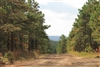 Oklahoma, Pittsburg County, 15.90 Acres Indian Ridge III, Creek. TERMS $360/Month