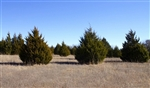 Oklahoma, Love County, 5.83  Acres Montgomery Ranch, Electricity. TERMS $340/Month