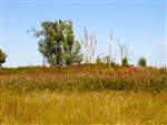 Oklahoma, Okfuskee County, 5.34  Acre Saddlebrook Ranch. TERMS $250/Month