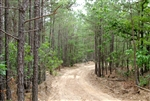 Oklahoma, Pushmataha County, 15.1 Acre Trophy Ridge II. TERMS $280/Month