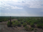 Texas, Reeves County, 70 Acres near Pecos. TERMS $400/Month