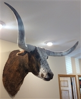 Longhorn Mount - Red & White