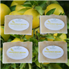 Grapefruit Bellini handmade soap