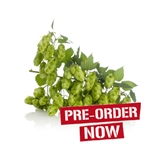 Centennial Bare Root Hop Plant (Pre-Order)