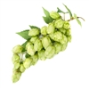 Chinook Bare Root Hop Plant