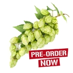 Chinook Bare Root Hop Plant (Pre-Order)