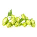 Early Choice Bare Root Hop Plant