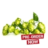 Golden Tassels Hop Plant in 2 Litre Pot (Pre-Order)