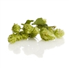 Hersbrucker Hop Plant in 2 Litre Pot