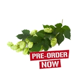 Late Cluster Bare Root Hop Plant (Pre-Order)