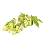 Liberty Bare Root Hop Plant