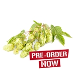 Liberty Bare Root Hop Plant (Pre-Order)